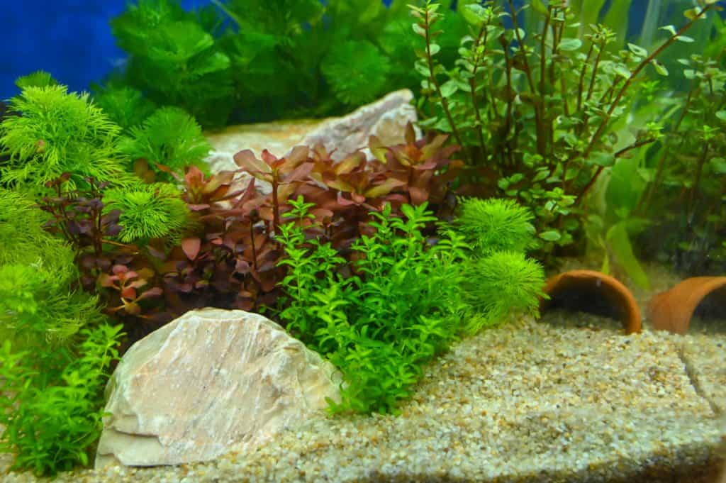A healthy looking planted aquarium with many great looking plants