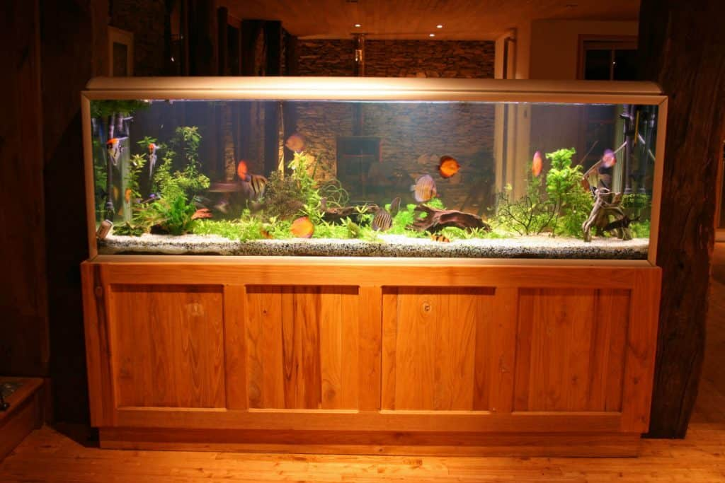A brightly lit aquarium at night in a living room